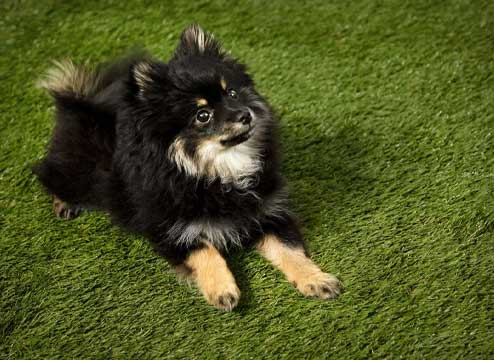 Pet turf is perfect for your four-legged furry friends to have fun in!