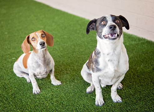 Pet Turf Buyer's Guide: The Best Turf for Your Best Friend