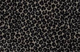 Shaw Cheetah