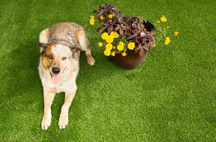 Pet Turf Rugs - Remnants