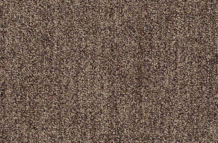 Shaw Have Fun Waterproof Carpet - Coffee