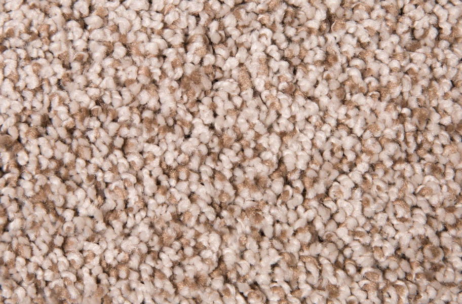 Air.o Fresh Start I Carpet with Pad - Allspice