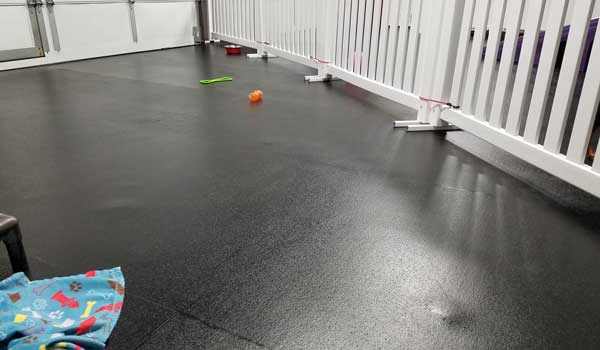 Customer review image of  in Doggy Daycare